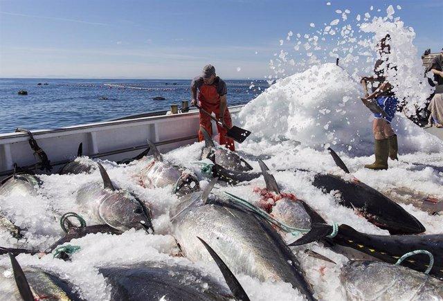 Un barco cargado de atunes.
