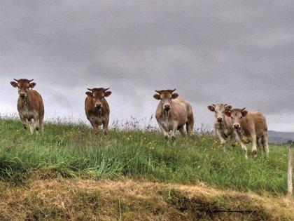 Unión de Uniones pide un etiquetado de la leche claro en origen de producción y envasado