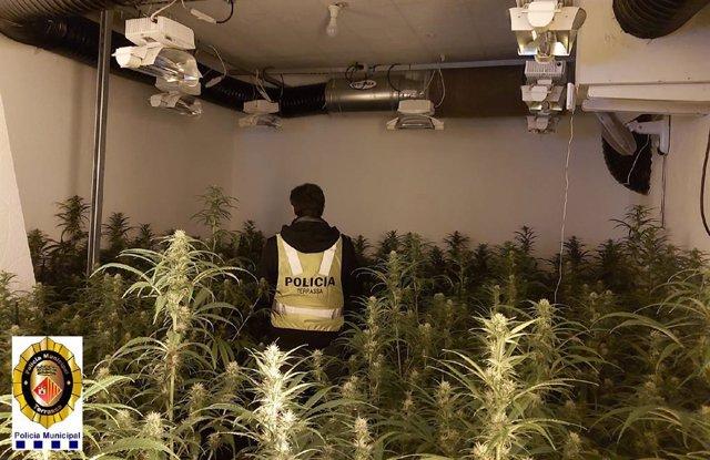 La plantació en un pis de Terrassa.