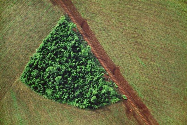Brasil alcanza cifras récord de deforestación en 2020.