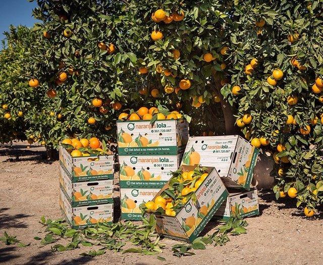 Naranjas Lola recién recolectadas, listas para su envío