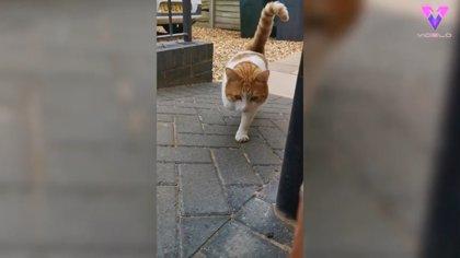Un gato de 3 patas protagoniza la portada del calendario Cats Protection, la misma organización benéfica que lo rescató