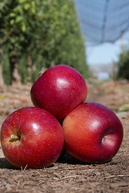 Cambio climático.- El IRTA anuncia la plantación de manzanos adaptados al cambio climático en 2021 en Catalunya