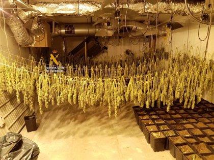 Diez detenidos con una red de cultivo de marihuana en un centro deportivo de Mijas (Málaga)