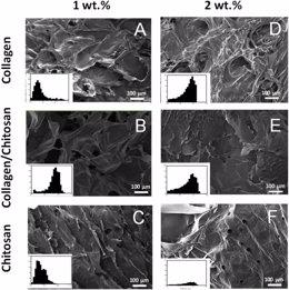 Investigadores de la US desarrollan andamios de colágeno y quitosano para reconstruir tejidos dañados