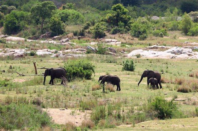 Un grupo de elefantes
