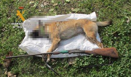Investigado un vecino de 86 años de Losar de la Vera por matar de un disparo a un perro que entró en su finca
