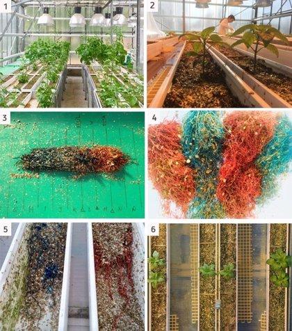 Las plantas producen más raíces cuando más rodeadas están por otras, según un estudio