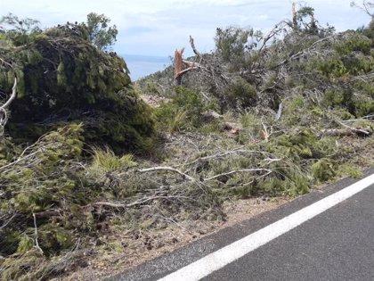 El Consell pone en marcha una línea de ayudas a particulares afectados por el 'cap de fibló' en la Serra de Tramuntana