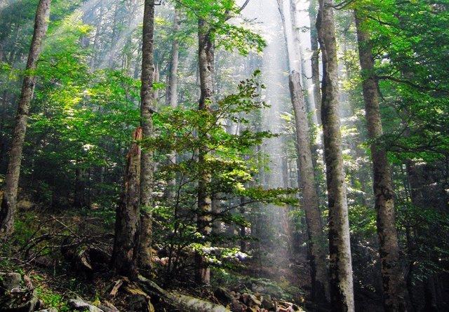 Bosque primario en Montenegro