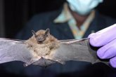 Foto: El 75% de las enfermedades infecciosas que afectan a las personas tienen un origen animal