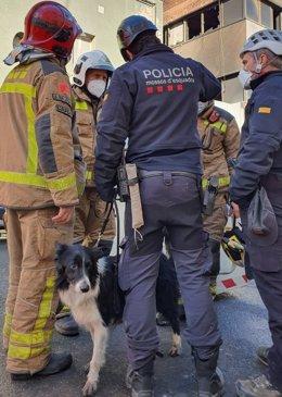 Els Mossos d'Esquadra activen un gos especialitzat perquè busqui persones a l'interior de la nau que s'ha incendiat a Badalona (Barcelona), el 10 de desembre del 2020.