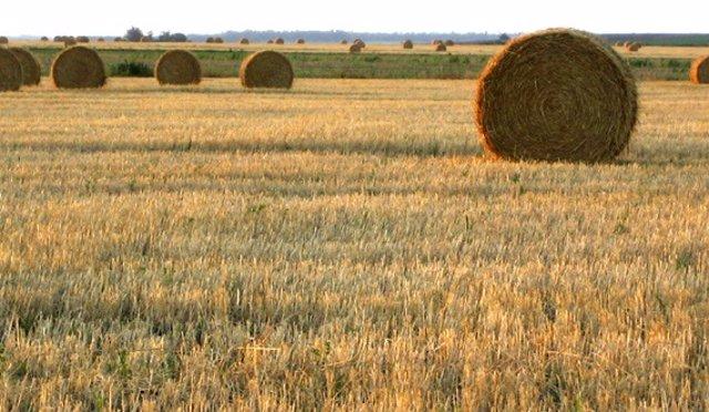 Cultiu de secà.