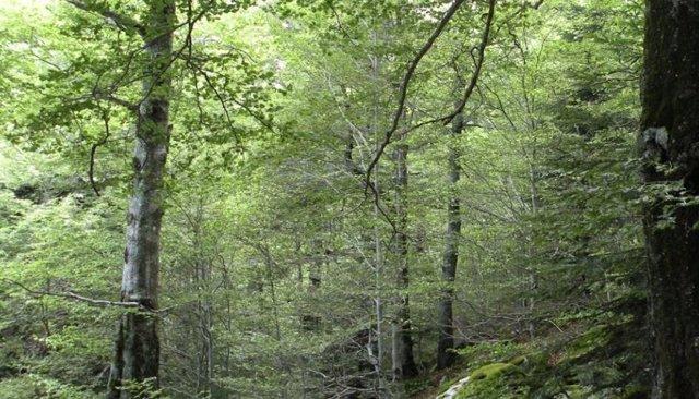 El CO2 actúa como fertilizante para las plantas