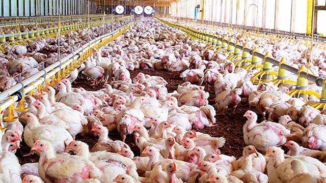 Imagen de archivo de una granja avícola