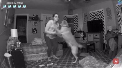 Perros increíbles: 8 historias sorprendentes de perros salvando la vida a sus dueños en diversas situaciones