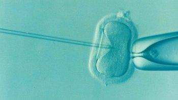 Foto: Una técnica de análisis cromosómico de los embriones 'in vitro' permite los primeros embarazos evolutivos en Europa