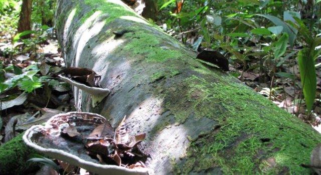 Tronco de árbol tropical