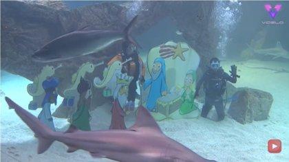 Dos buceadores se sumergen entre tiburones y peces para montar un belén bajo el agua