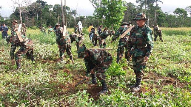 El Comando Estratégico Operacional de Bolivia (CEO) erradicó entre enero y diciembre de este año 6.576 hectáreas de coca ilegal y excedentaria en parques y reservas foréstales sin el uso de agentes químicos, según informó el titular de la institución,