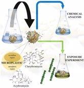 Foto: Algunos antibióticos pueden adherirse a microplásticos y liberarse en el agua