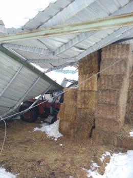 Daños en la ganadería por el temporal Gloria