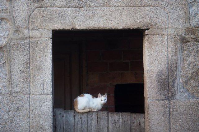 Un gat recolzat en la porta d'un domicili.