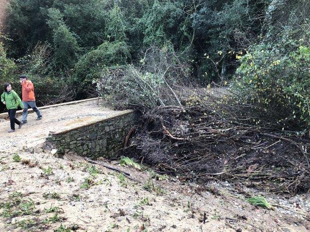 Les tempestes de divendres provoquen afectacions als camins de Collserola