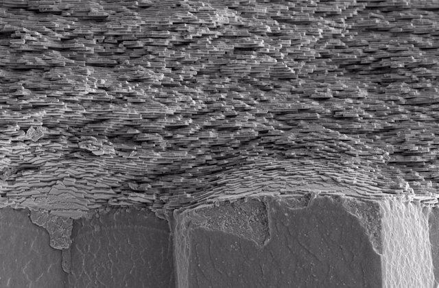 Una sección transversal de una concha que muestra el nácar en capas periódicas sobre una estructura de concha prismática.