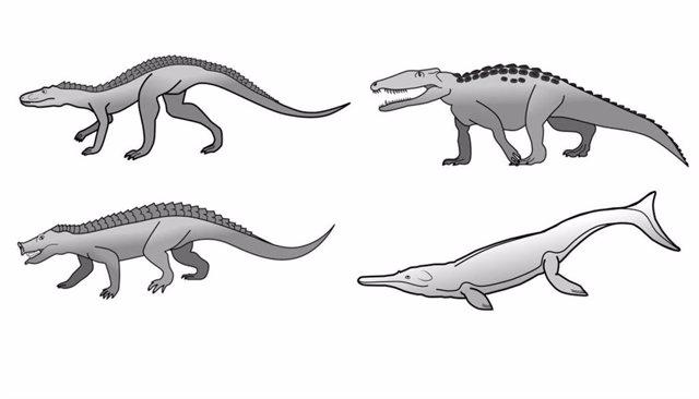 Los cocodrilos han tenido una diversidad de formas mucho mayor en el pasado. Los ejemplos incluyen corredores rápidos, formas excavadoras y excavadoras, herbívoros y especies oceánicas.