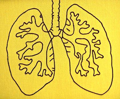 Células inmunes descubiertas en los pulmones mejoran la defensa contra los virus