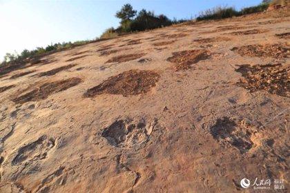 Huellas únicas de dinosaurios del Cretácico encontradas en China