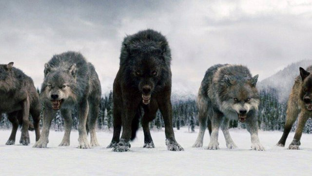 Lobos de la serie Juego de Tronos