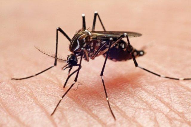 Las autoridades sanitarias han informado sobre un colapso en los hospitales de Perú ya que se recogen más de 300 nuevos casos diarios de contagio de dengue. Asimismo, los medicamentos comienzan a escasear debido a la enorme demanda