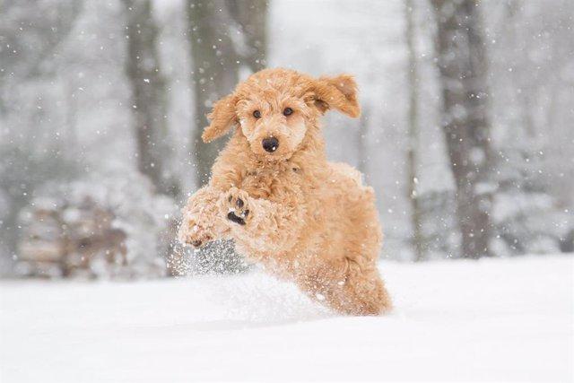 Cuidados veterinarios ante el temporal
