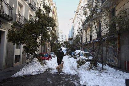 Los 1,7 millones de árboles de la ciudad de Madrid se revisarán por 1.100 personas durante 60 días