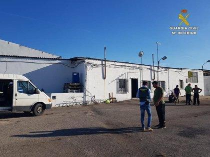 La Guardia Civil detiene a un matrimonio acusado de explotar a temporeros en campos de la Comunitat Valenciana