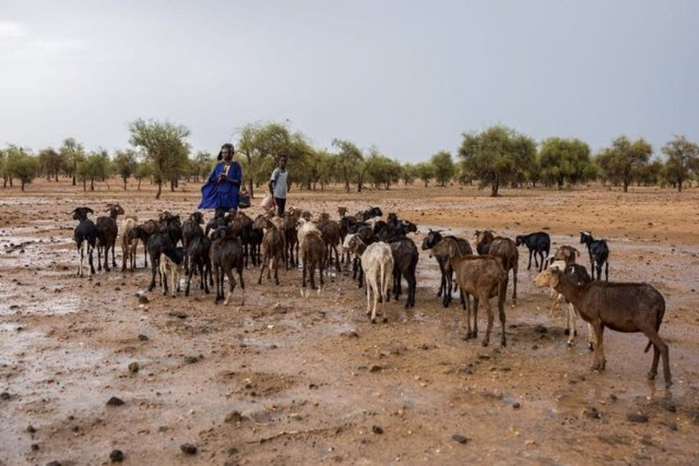 Pastores con su rebaño en el Sahel