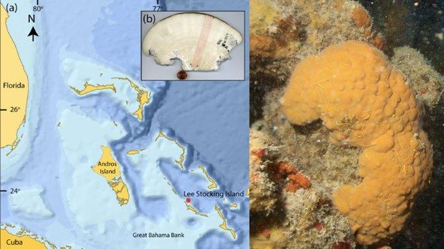 Una esponja marina aporta un registro climático de 600 años