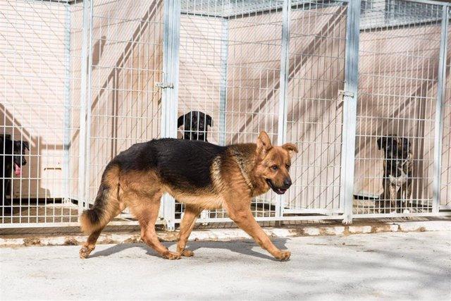 La DPZ destina cada año 320.000 euros al centro de protección animal