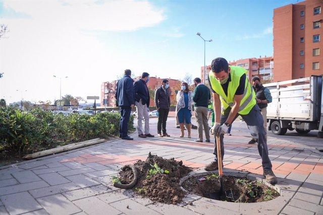 Plantación de árboles en Málaga