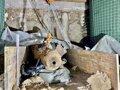 Desactivada en el norte de Italia una bomba de la IIGM tras la evacuación de 4.500 personas