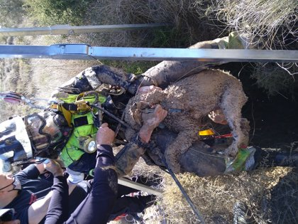 Los bomberos rescatan a un perro que se había caído a un pozo de 30 metros de profundidad en Corvera (Murcia)