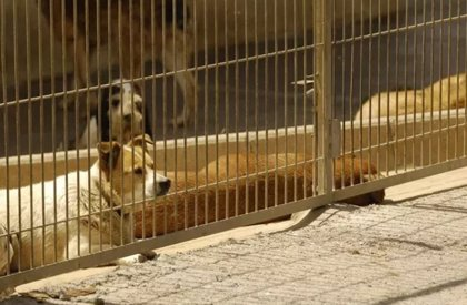 El Centro Municipal de Acogida de Animales contará en dos meses con una zona de esparcimiento de 1.000 metros cuadrados