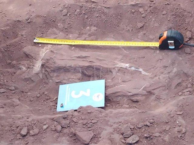 Restos del titanosaurio, encontrado por trabajadores de Pampa Energía