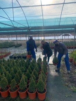 La Diputación de Cáceres comienza el reparto entre los municipios de los árboles y arbustos de su vivero provincial