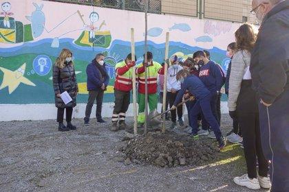 El Ayuntamiento de Granada plantará 693 nuevos árboles por los distintos distritos de la ciudad