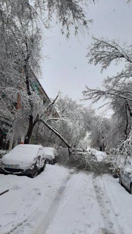 Caída de ramas en Aranjuez