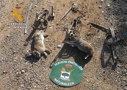 Un vecino Hellín podría enfrentarse a una multa de entre 25.000 y 100.000 euros por usar cepos para cazar