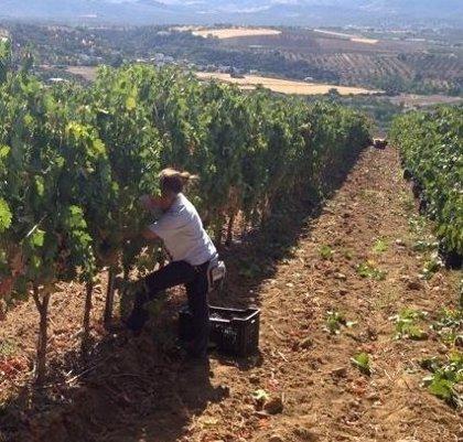 """La Junta resuelve """"en menos de tres meses"""" ayudas por 3,5 millones para el sector agrario afectado por el COVID-19"""